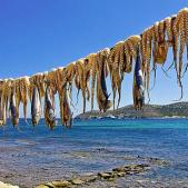 Octopus Drying by the Sea (image by FosterFoto)