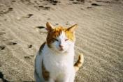 A ginger boy wild cat I snapped on the beach in Crete in winter