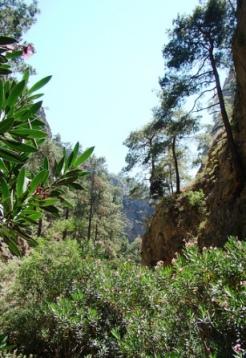 Agia Irini Gorge (image by Xamogelo)