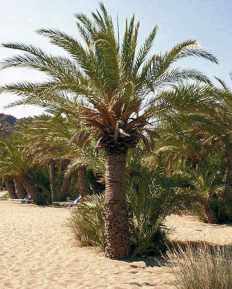 Discover Vai Palm Beach