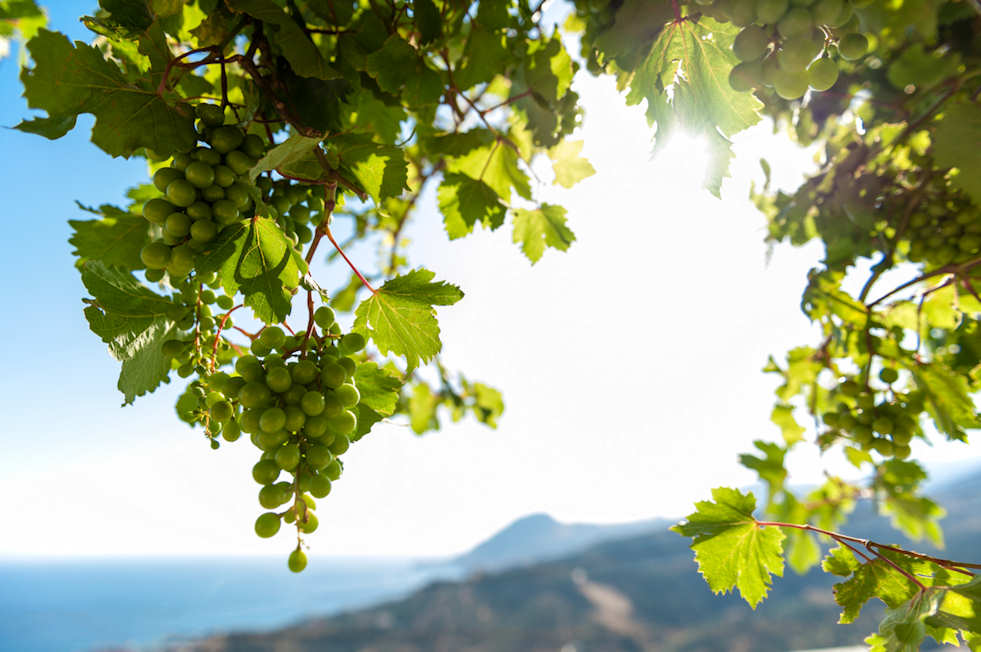 Wide open spaces, fresh air and vineyards in Crete...