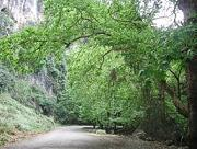 Leafy ravine on the road to the village