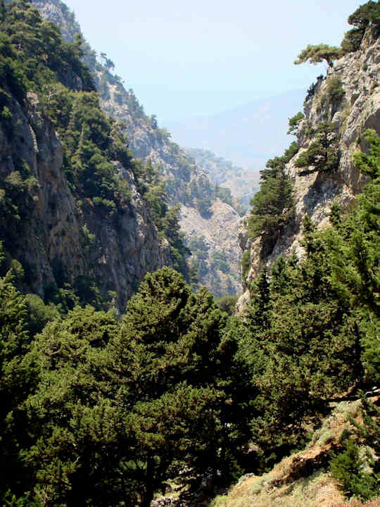 A forested gorge in western Crete (image by xamogelo)