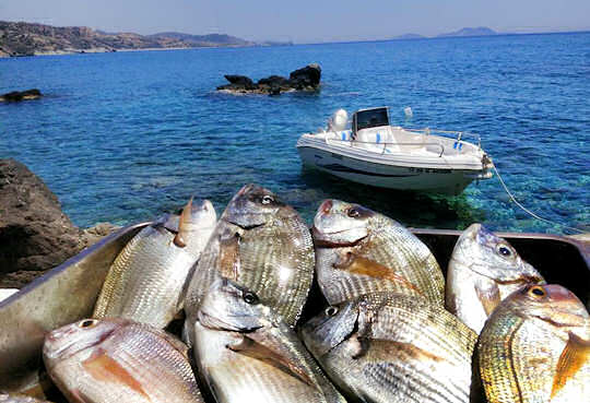 Fresh fish caught today, served tonight at the taverna by the sea