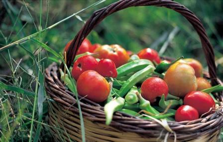 The Cretan Diet - a basket of fresh vegetables