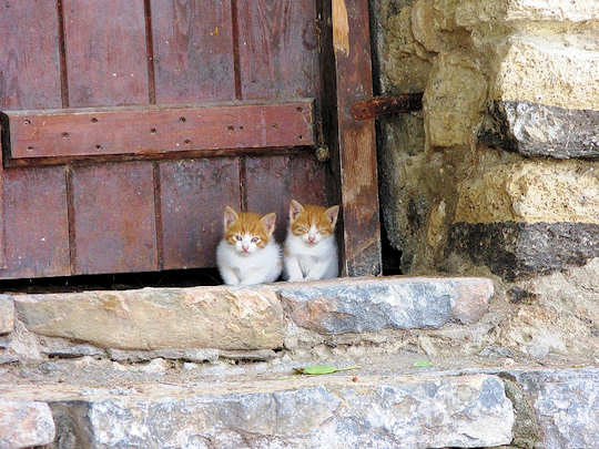 Curious Kittens by Andrew and Annemarie