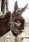 Donkey at the sanctuary