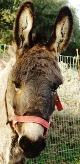 Donkey at Walk with Donkeys shelter
