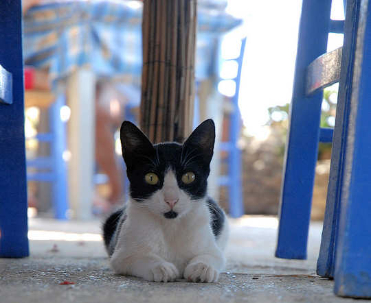 Cat under a taverna table (image by Luigi Rosa)