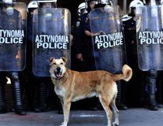 Greek Film Festival - Dogs of Democracy
