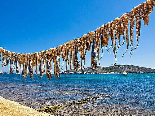 Octopus drying by the seaside in Antiparos, Greece (image by Fosterfoto)
