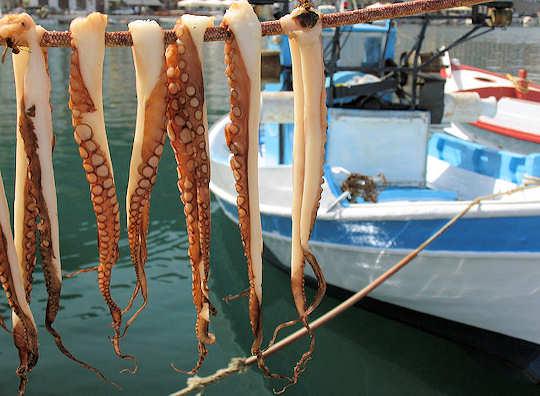 Octopus Drying near Blue & White Fishing Boat, Gythio, Greece (image by karol m)