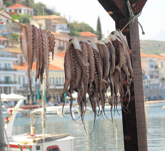 Fresh Octopus by the Taverna, Gythio, Greece (image by karol m}
