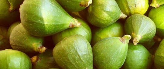 Fresh green figs