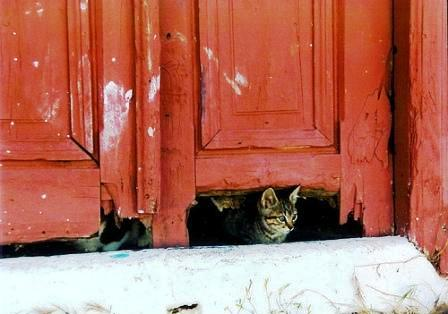 Yiasou! Cat in Karpathos by Green Manalishi