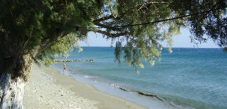 Keratokambos Beach - Tamarisk Tree and shade by the water