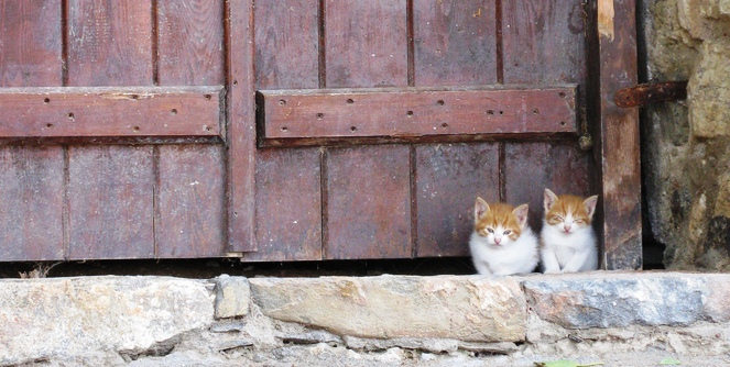 Kittens, Crete by Andrew and AnneMarie