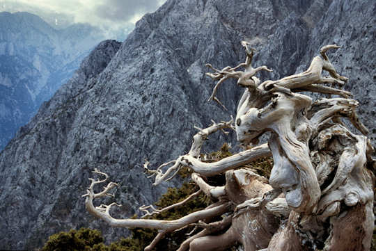 Samaria Gorge - Mt Gingilos (image by Mark Latter)