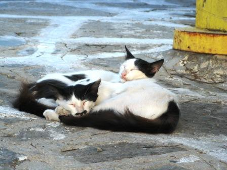 Mykonos Cats Sleeping in the Square by Katia