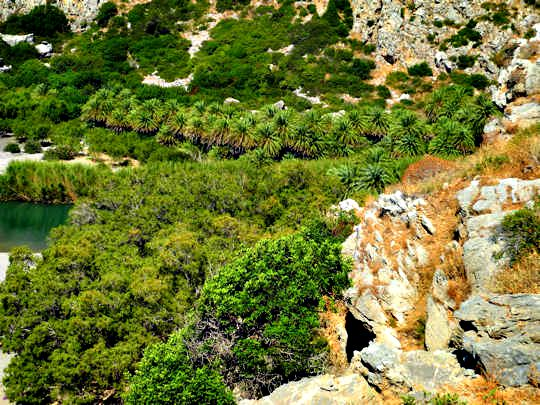 Preveli Palm Forest (image by Mark Latter)