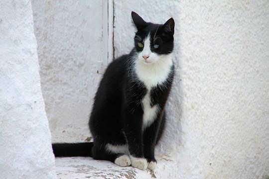 Rocky the Santorini Cat by Klearchos Kapoutsis