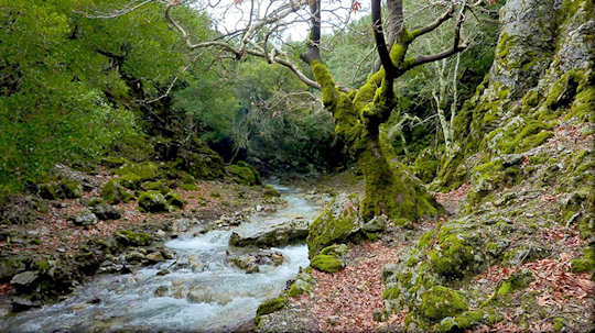 Rouvas Forest in Central Crete