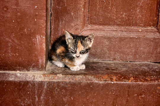 Stray Kitten by Neal Fowler