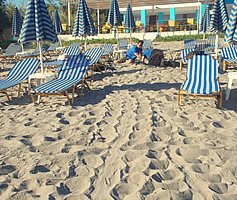 Sea Turtle tracks as the female comes ashore to try to lay her eggs, she gets blocked by beach chairs