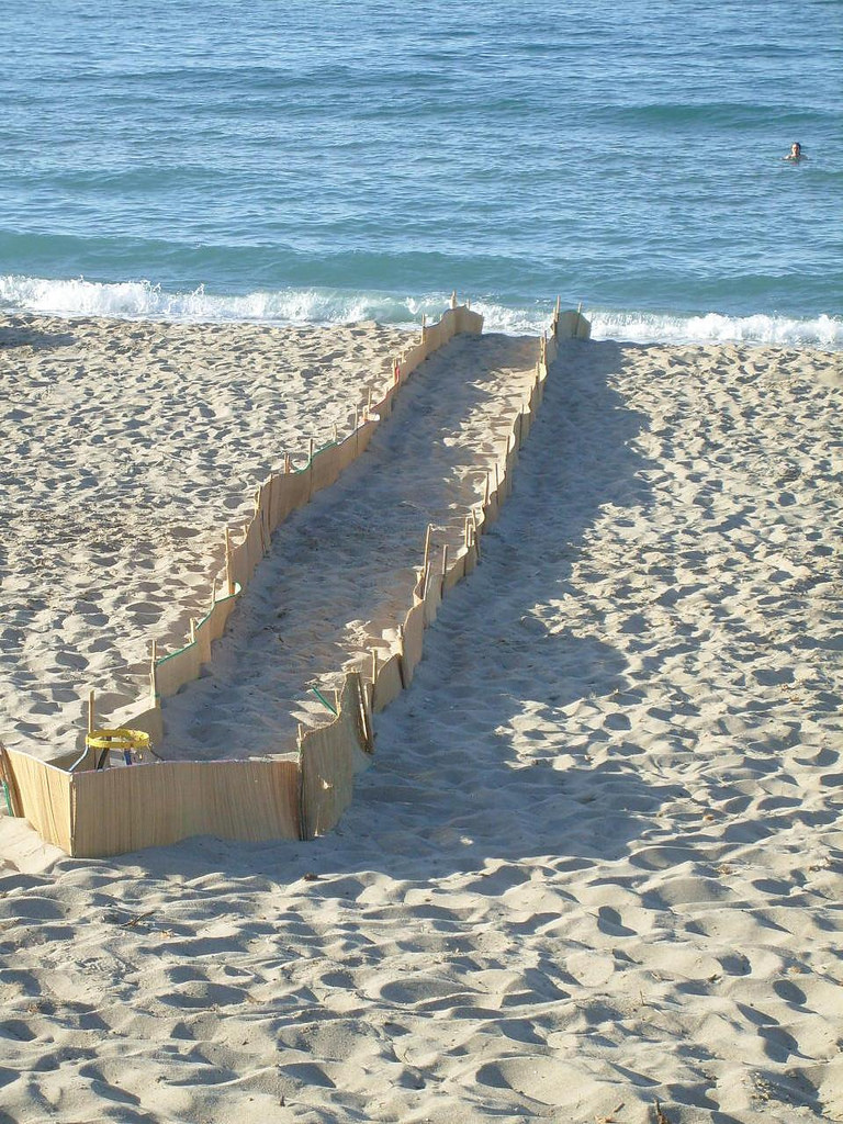 Sea Turtle nest protection on Rethymnon Beach