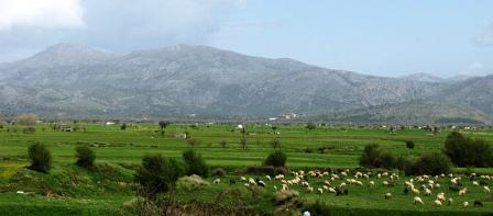 Tzermiado - on the lush Lasithi Plateau