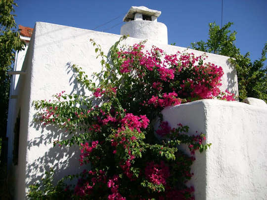 A village house in Vori with flowers