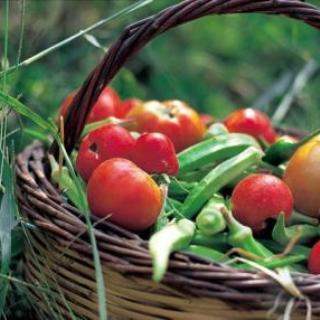 Agrotourism - fresh organic farm vegetable in a basket