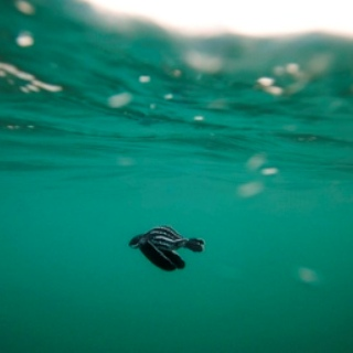 Conservation - this is a baby turtle