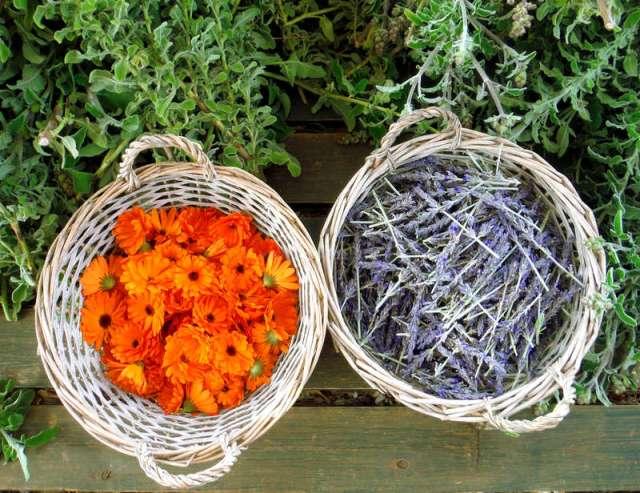 Workaway Organic Farm