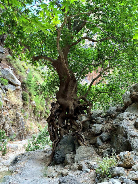 The scenery in Agia Irini Gorge is just as interesting as that in Samaria Gorge and it is not as busy with bus tours.