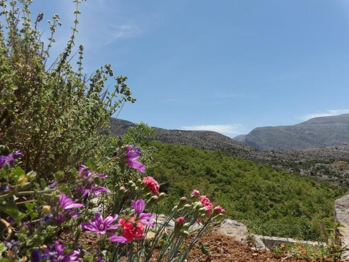 Sprint Weather Heraklion - visit Arodamos Guesthouses to soak up the first rays of sun and enjoy the flowers blooming