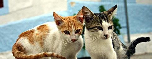 Cats in Kos by andsbands