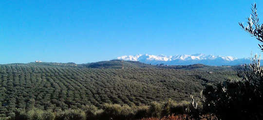 Terra Creta Estate in Kolymvari - view over olive groves to White Mountains