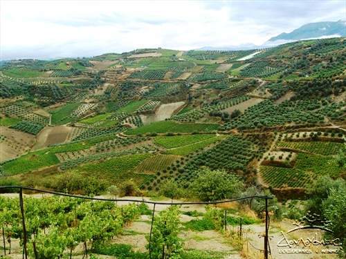 Crete Wine - Vineyards of Douloufakis Winery near Dafnes Village, Heraklion