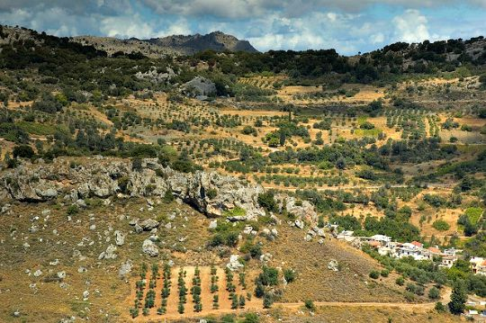 The main crop of the island - many plantings are on steep rocky hillsides (image by Nat Pikozh)