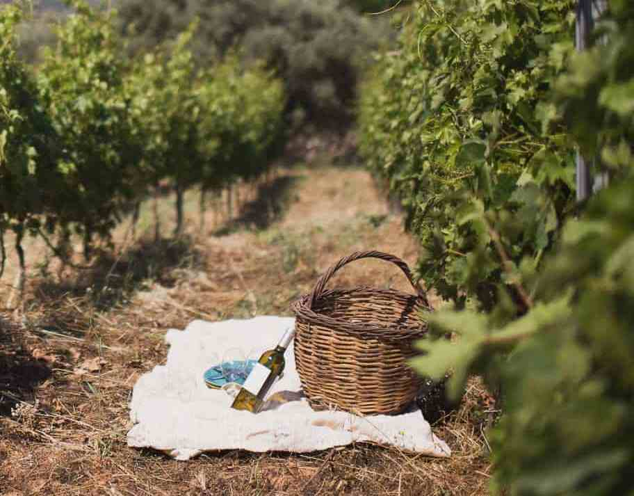 Enjoy a picnic at Dourakis Winery