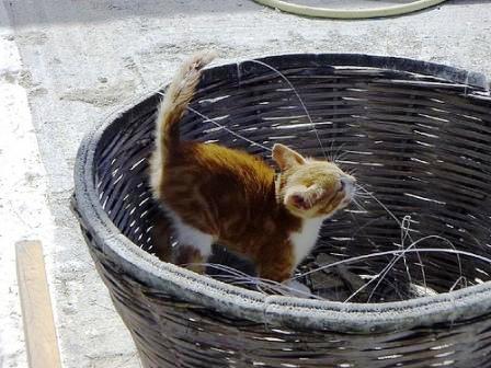 Kitten in Karpathos