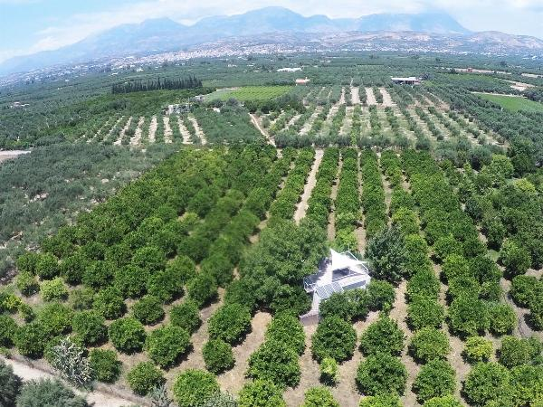 A lush orange plantation in the centre of the Messara Valley showing Mires town in the background