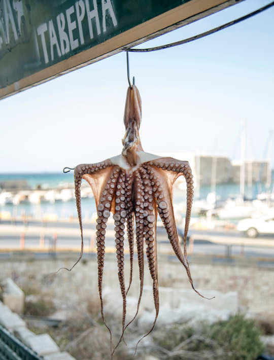 Heraklion Old Port and Octopus