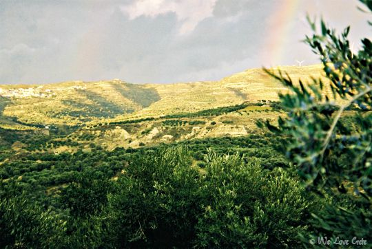 Groves in the Messara Valley, Crete