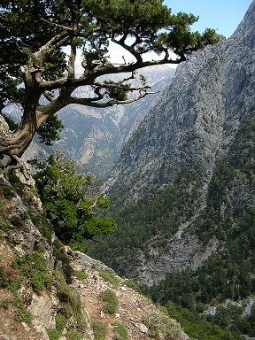 This is Samaria Gorge (image by Sanderovski)