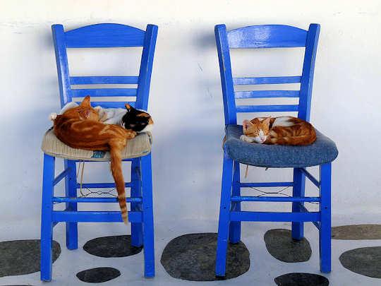 Cats in Mykonos, Greece by lo.tangelini