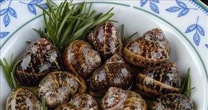 Snails in Rosemary - here called Chochlious boubouristous Xοχλιούς μπουμπουριστούς.