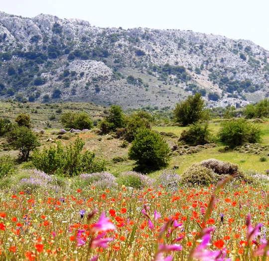 Spring flowers in Crete