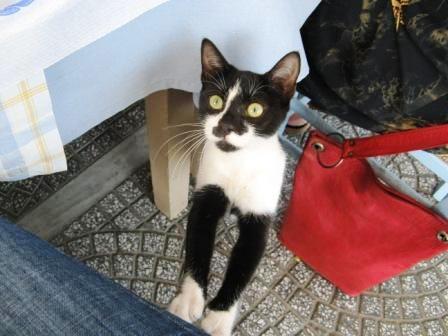 Kitten on my knee, Azolimnos, Syros